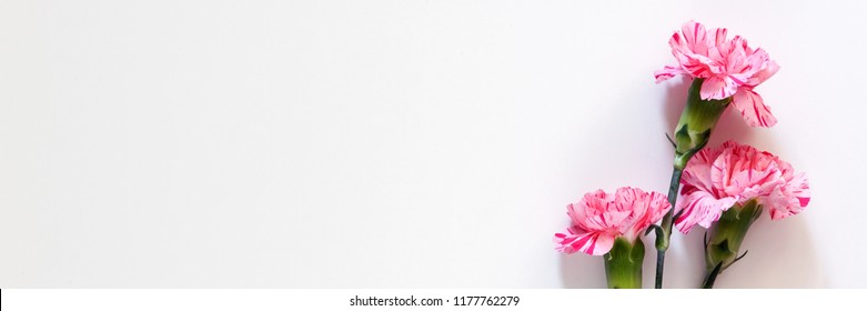 Panoramic photo of white background copy space with pink flowers viewed from above
