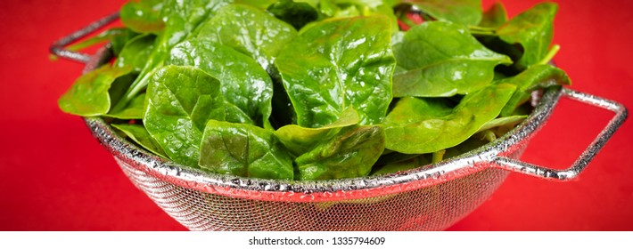 Panoramic photograph of freshly washed organic spinach in metal colander.
