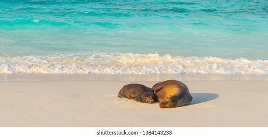 Imagenes Fotos De Stock Y Vectores Sobre Island Sleep