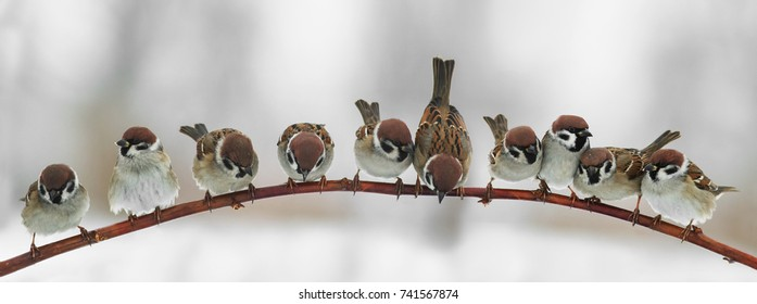 panoramic picture of funny cute birds sparrows sitting on a branch in the Park and look forward