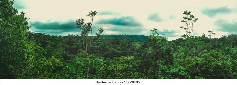 PANORAMIC RAINFOREST IN COSTA RICA