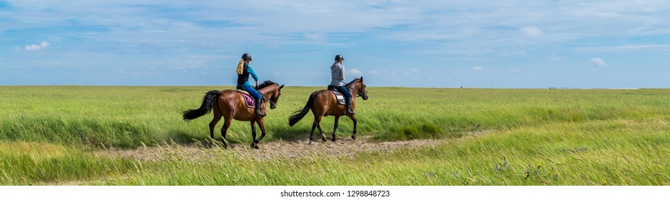 Panoramic ride in the salt marshes North Sea