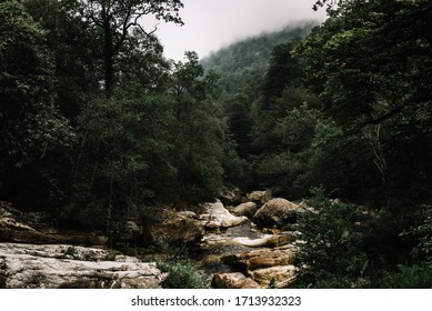 Panoramic of the rocky course of the Saja river surrounded by a large forest of dark green beech trees and gray clouds in Cantabria, Spain.