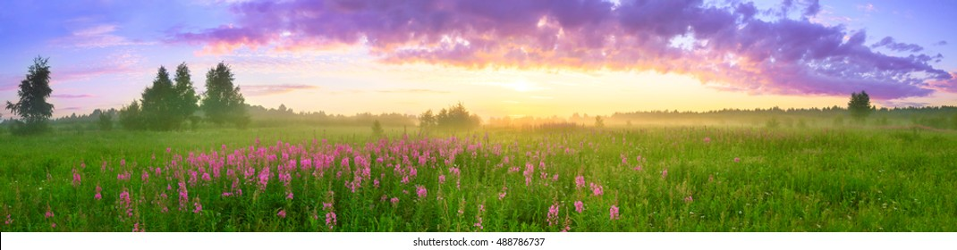 panoramic rural summer landscape with sunrise, a blossoming meadow and fog. panorama