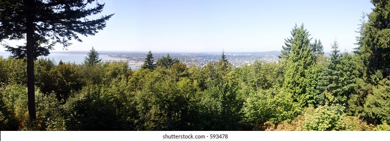 Panoramic shot of Bellingham, Washington from a tower, with trees in foreground