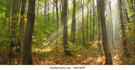panoramic shot of a forest in early morning