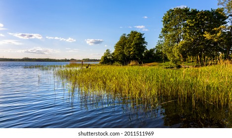 Panoramic summer view of Jezioro Selmet Wielki lake landscape with reeds and wooded shoreline in Sedki village in Masuria region of Poland - Shutterstock ID 2011511969