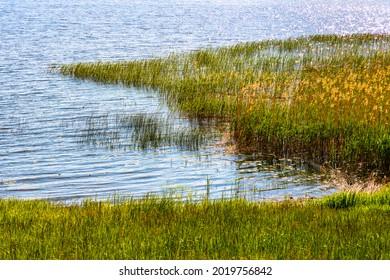 Panoramic summer view of Jezioro Selmet Wielki lake landscape with reeds and shoreline in Sedki village in Masuria region of Poland