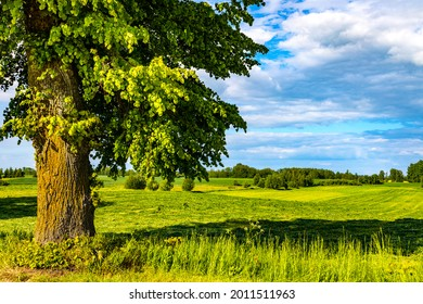 Panoramic summer view of meadows and wooded plains at Jezioro Selmet Wielki lake in Sedki village in Masuria region of Poland