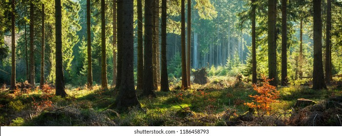 Panoramawald im Herbst