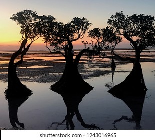 Panoramic sunset with beautiful trees on Walakiri Beach in Sumba Island, East Nusa Tenggara, Indonesia