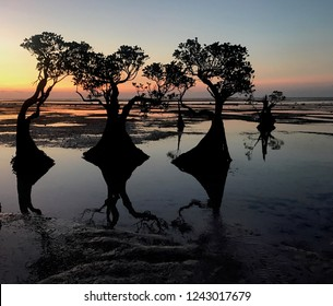 Panoramic sunset with beautiful trees on Walakiri Beach in Sumba Island, East Nusa Tenggara Indonesia