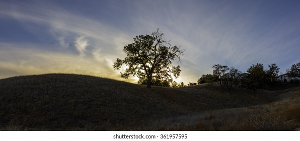 Panoramic sunset behind a single tree in southern California.