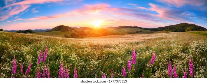 Panoramic sunset over a vast blossoming meadow landscape, with flowers in the foreground, hills on the horizon and colorful sky with pink clouds