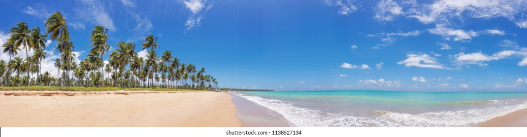 Panoramic tropical beach with palm trees in Maceió, Brazil.