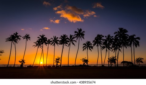 Panoramic tropical palm trees sunrise of Hawaii