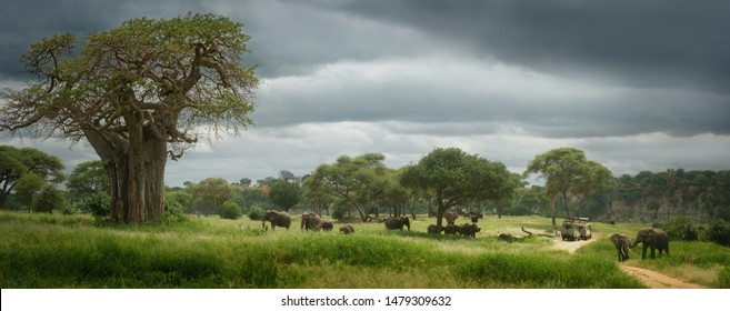 Panoramic view of the African savannah with group of wild elephants. Tarangire National Park,Tanzania.