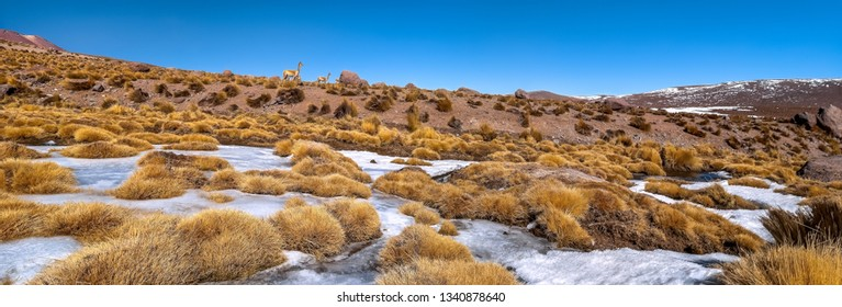 Panoramic view of andean landscape with lamas (lama guanaco), Desert of Atacama, Chile