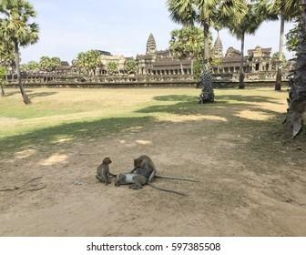 Panoramic view of Angkor Wat, Cambodia, with monkeys