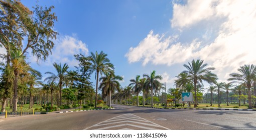 Panoramic view of asphalt road framed by trees and palm trees with partly cloudy sky in a summer day, Montaza public park, Alexandria, Egypt
