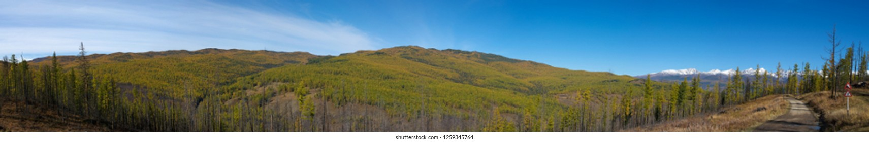 Panoramic view of autumnal forest valley in mountain Altay, Russia