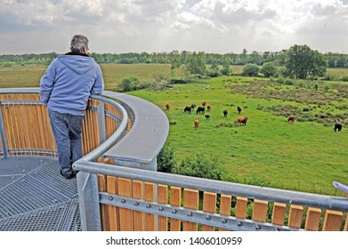 panoramic view from the Banisveld observation tower in nature reserve Kampina, netherlands