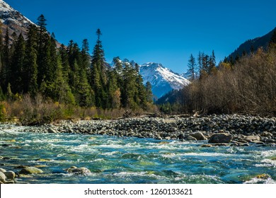 Panoramic view from bank of the river Gonachhir with pine forest and snow caucasus mountains during sunny autumn day