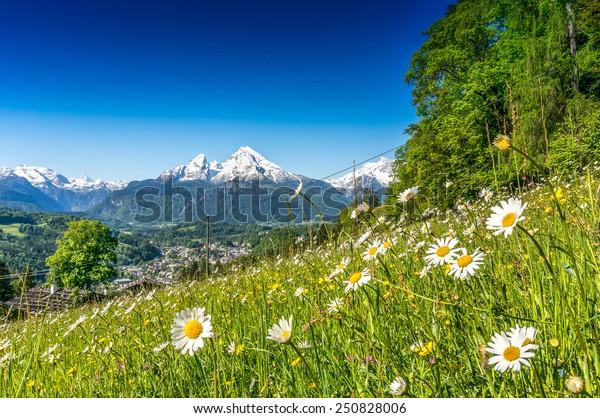Panoramasicht auf die schöne Landschaft der Bayerischen Alpen mit schönen Blumen und dem berühmten Watzmann-Berg im Hintergrund im Frühjahr, Nationalpark Berchtesgadener Land, Bayern, Deutschland