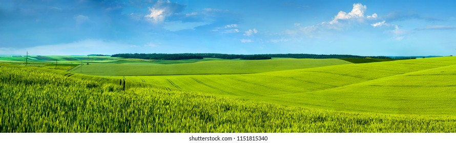 Panoramic view of beautiful yellow-green field hils with blue sky
