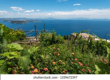 Panoramic view from the blooming hill to the Neapolitan Gulf, Procida and Vesuvius. Ischia, Italy