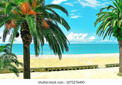 Panoramic view of blue sea, beach, sky and palm trees. Gagra, Abkhazia.Travel resort destination. Calm relax vacation background