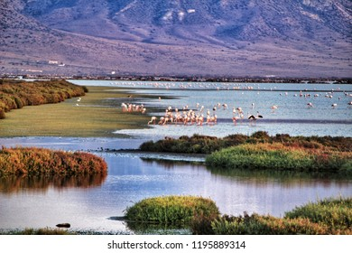 Panoramic view of Cabo de Gata wetlands with pink flamingos and mountains in the background.