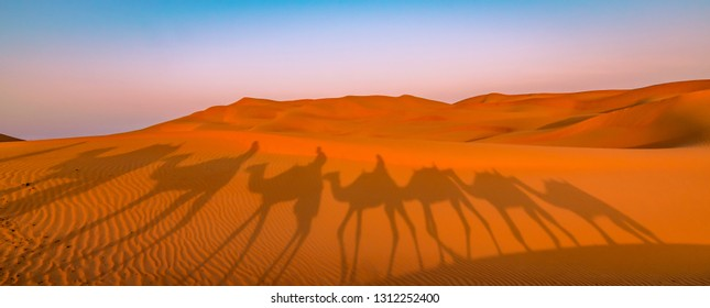 Panoramic view of camel ride in the desert. Shadow of camels in the desert sand at sunrise. Adventure in Dubai and Abu Dhabi, UAE