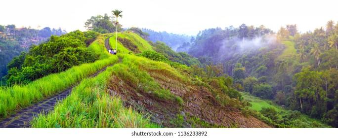 Panoramic view of Campuhan Ridge Walk , Scenic Green Valley in Ubud Bali