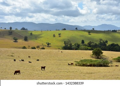 Panoramic View with cattle at Atherton Tablelands, Queensland, Australia