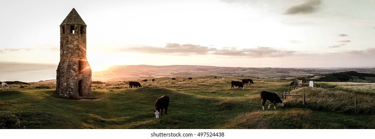 A panoramic view of cattle grazing  at sundown by St. Catherine's Oratory on the Isle of Wight, England.
