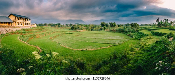 Panoramic view of a circular rice terrace in Ruteng, Flores, Indonesia