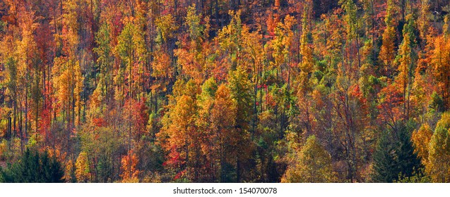 Panoramic view of colorful autumn trees