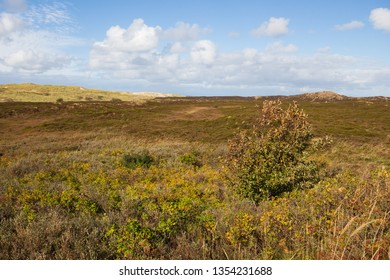 panoramic view at colorful dunes in List at Sylt Island in fall