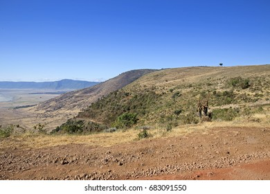 Panoramic view of colourful Ngorongoro crater national park, Tanzania