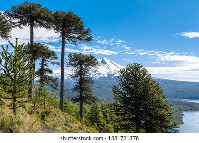 Panoramic view of Conguillio National Park, Chile