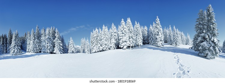 A panoramic view of the covered with frost trees in the snowdrifts. Magical winter forest. Natural landscape with beautiful sky. The revival of the planet. - Shutterstock ID 1801918069