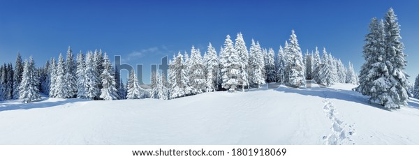 A panoramic view of the covered with frost trees in the snowdrifts. Magical winter forest. Natural landscape with beautiful sky. The revival of the planet.