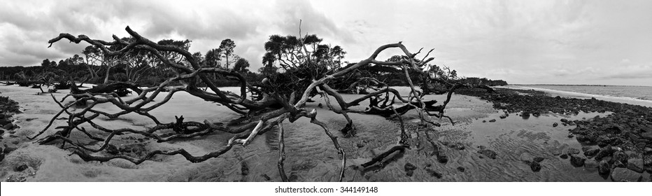 Panoramic view of a dead tree at Driftwood Beach on a cloudy day/Grave Yard of Trees