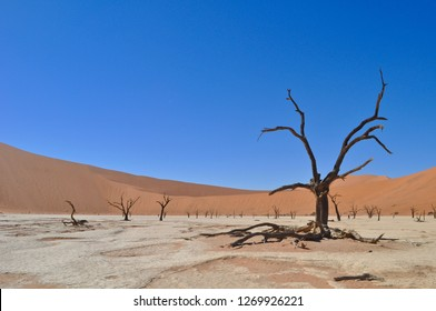 Panoramic View of Deadvlei, Sossusvlei Park, Namibia