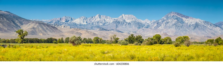 Panoramic view of Eastern Sierra Nevada mountain range with blooming meadows and trees on a beautiful sunny day with blue sky in summer seen from Bishop, Inyo County, California, USA