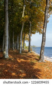 """panoramic view from a forest of beeches called """"Fanefjord Skov """"directly next to the shore of the Baltic Sea at isle of Moen in Denmark"""
