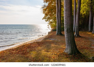 "panoramic view from a forest of beeches called ""Fanefjord Skov ""directly next to the shore of the Baltic Sea at isle of Moen in Denmark"