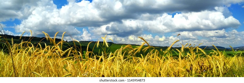 Panoramic View of a Grain Field with a Dramatic Sky in the Background, Zlin, Czech Republic