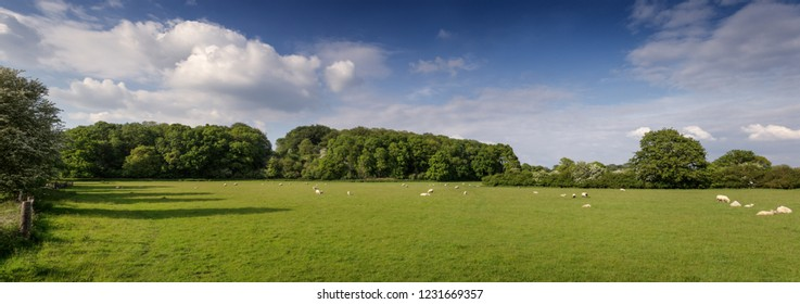 panoramic view of a green field with sheep grazing on the land
